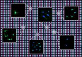 Photolithography and DNA tethers used to print cellular messaging environments
