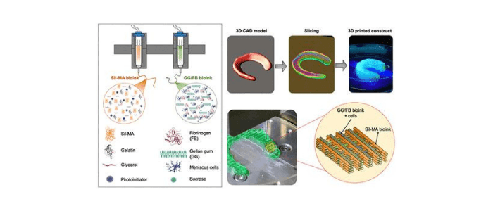 Bioprinting hybrid fibrocartilage tissue constructs