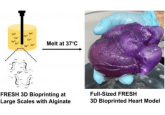 bioprinted heart